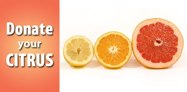 donate citrus