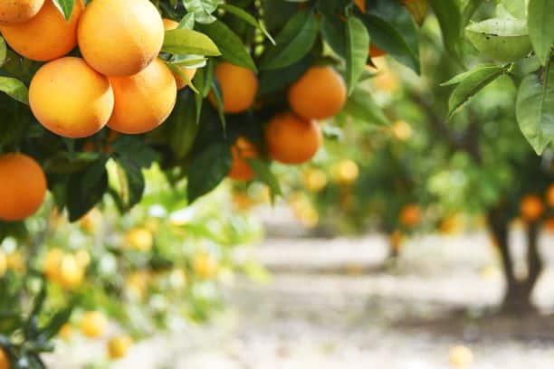 Citrus Donations